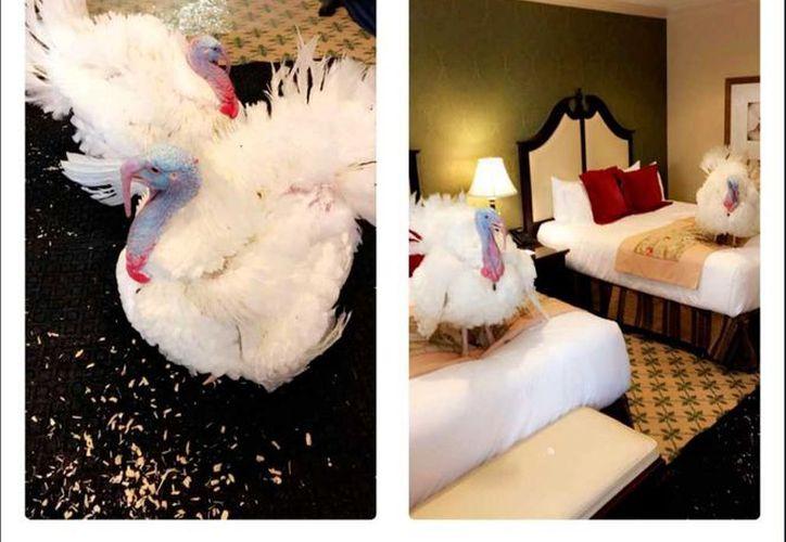 Trump asignó un cuarto especial para las aves en exclusivo hotel cercano a la Casa Blanca. (Foto: El comercio)
