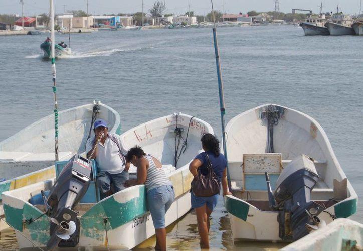 Se autorizaron poco más de 250 permisos para la captura de pepino de mar en Yucatán. En la imagen, pescadores de Celestún. (SIPSE)