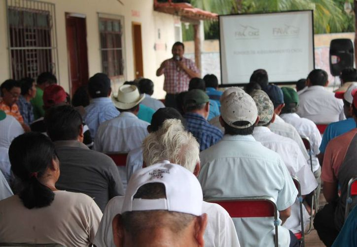 Ayer se reunieron los ganaderos del municipio Lázaro Cárdenas. (Raúl Balam/SIPSE)