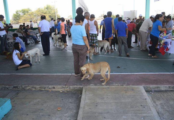 Desde las primeras horas del día los ciudadanos llevaron a sus mascotas a los puestos de vacunación. (Harold Alcocer/SIPSE)