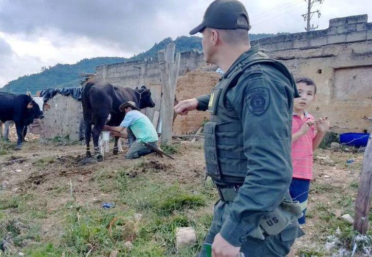 Las autoridades mexicanas anunciaron que se suspendió la importación de leche de Colombia debido a un brote de fiebre aftosa. (Noticieros Televisa)