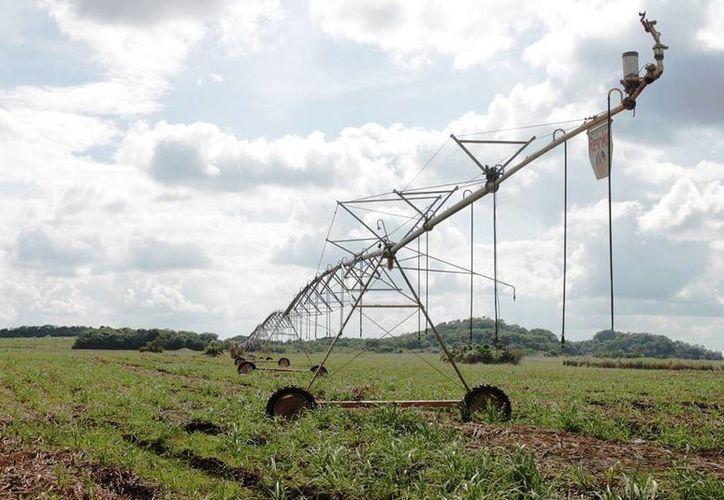 Se busca rehabilitar, mejorar y ampliar la infraestructura para almacenar y derivar aguas superficiales y subterráneas para la agricultura. (Edgardo Rodríguez/SIPSE)