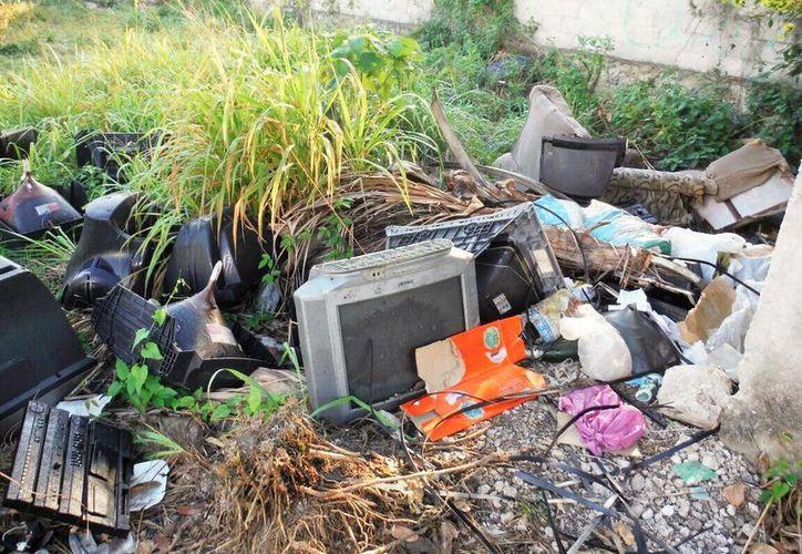 Al menos cinco direcciones municipales realizan labores de descacharrización en Cozumel. (Cortesía)