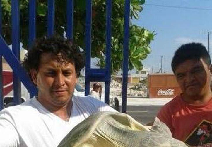 El ejemplar de tortuga blanca que fue rescatado en Chuburná Puerto. (SIPSE)