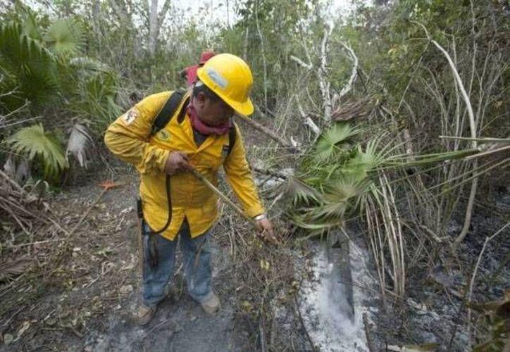 Actualmente se registran seis incendios forestales activos en el estado. (Archivo/SIPSE)