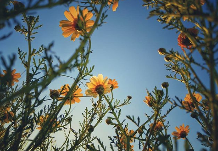La astenia primaveral es un trastorno exclusivo de esta época. (Foto: Instagram/_m_d_c_)