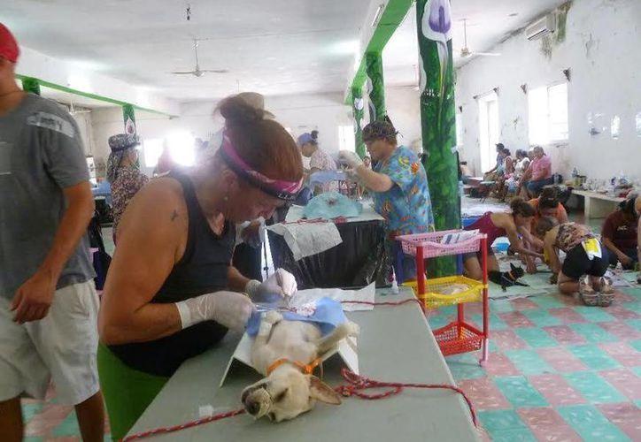 La campaña de esterilización la realiza la asociación civil 'Alma Verde'. (Raúl Balam/SIPSE)