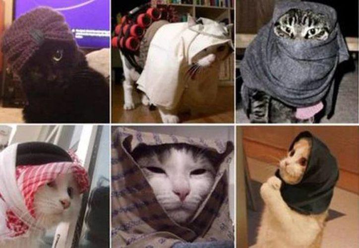 Twitter se llena de gatos para apoyar operación antiterrorista en Bélgica. (Imagen tomada del Twitter de @mejorchef)