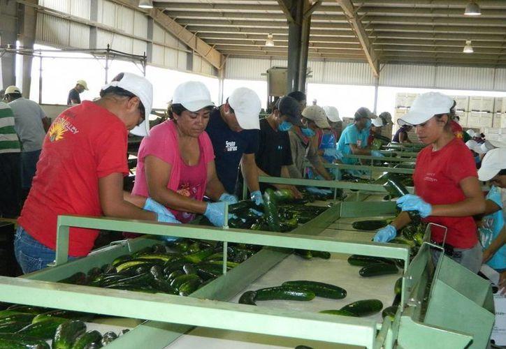 Pequeños productores de Tabasco, Campeche y Oaxaca sentirían el impacto de las nuevas reglas. (Archivo/SIPSE)