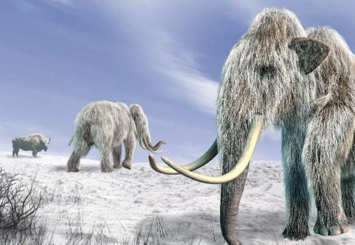 Los visitantes podrán conocer el modo de vida de el Dientes de Sable, los perezosos gigantes y más animales que vivieron en esta época. (Contexto/Internet)