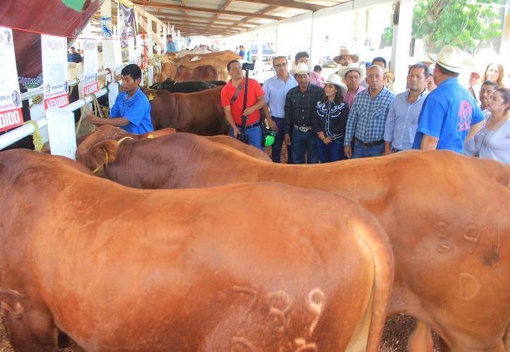 El municipio de Bacalar tiene vocación en agricultura. (Javier Ortíz/ SIPSE)
