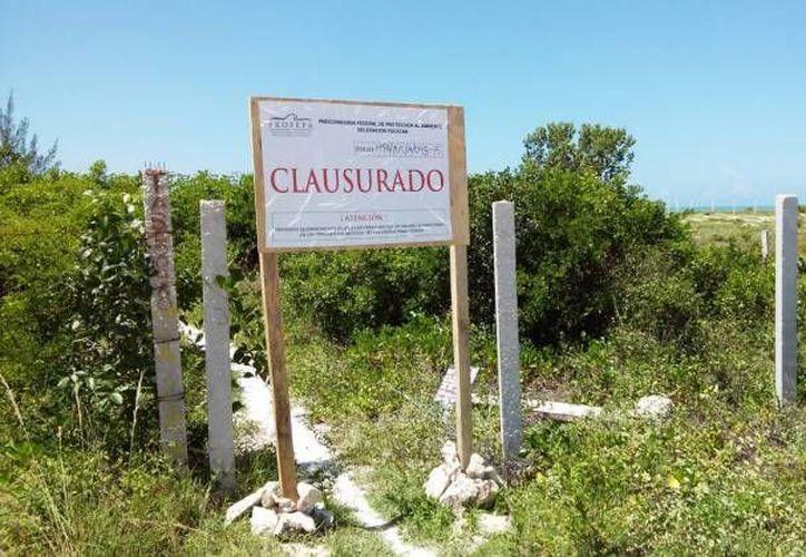 La Profepa clausuró dos espacios: uno de extracción minera en Acanceh, Yucatán, y otro por remoción de vegetación en Quintana Roo. (Fotos de contexto de SIPSE)