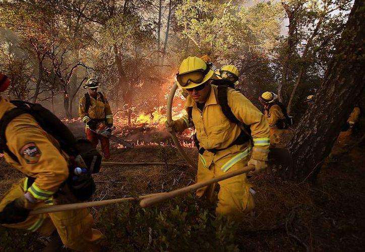 Un total de 18 incendios forestales han obligado a miles de bomberos a combatirlos en California, que ya fue declarado en estado de emergencia. (Foto: AP)