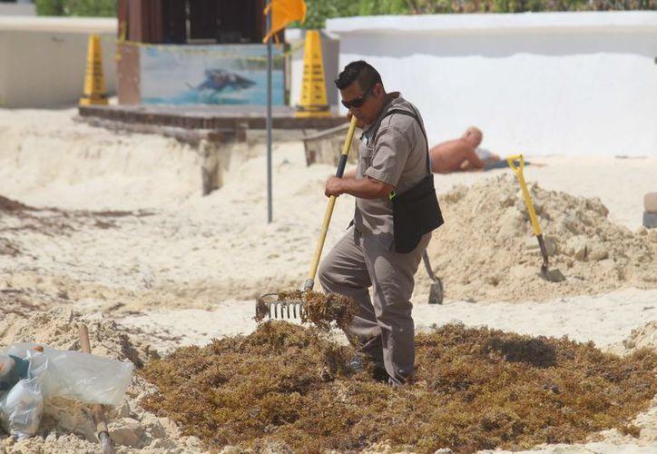 Especialistas recomiendan no enterrar el sargazo. (Foto: Octavio Martínez/SIPSE)