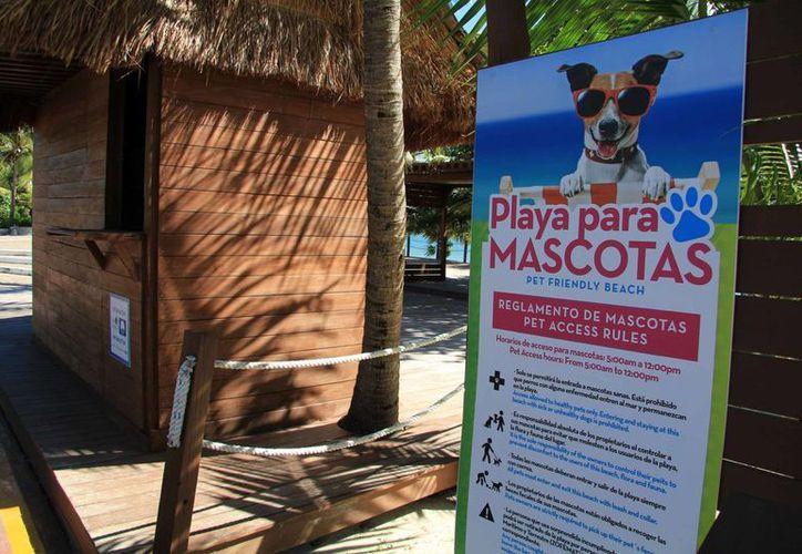 La playa coral permite que las mascotas anden libremente en los arenales.(Luis Soto/SIPSE)