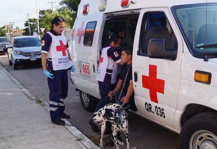 Durante 2018 se registraron cerca de dos mil personas atendidas por mordeduras de perros en Quintana Roo.  (Daniel Tejada/SIPSE)