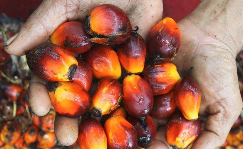 La gran mayoría de los productos alimenticios cuentan con el aceite de Palma, el cual es peligroso para la salud y también para el medio ambiente.(Foto de RT)