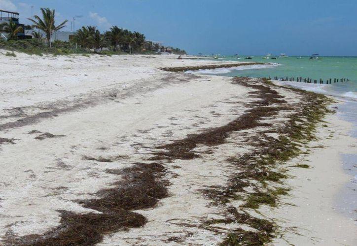 En el tramo Chelem-Chuburná se han recuperado al momento siete kilómetros de playa, informó el titular de la Seduma, Eduardo Batllori. (Gerardo Keb/Milenio Novedades)