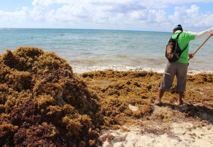 Trabajadores de clubes de playas y hoteles laboraron a marcha forzada para limpiar los arenales. (Adrián Barreto/SIPSE)