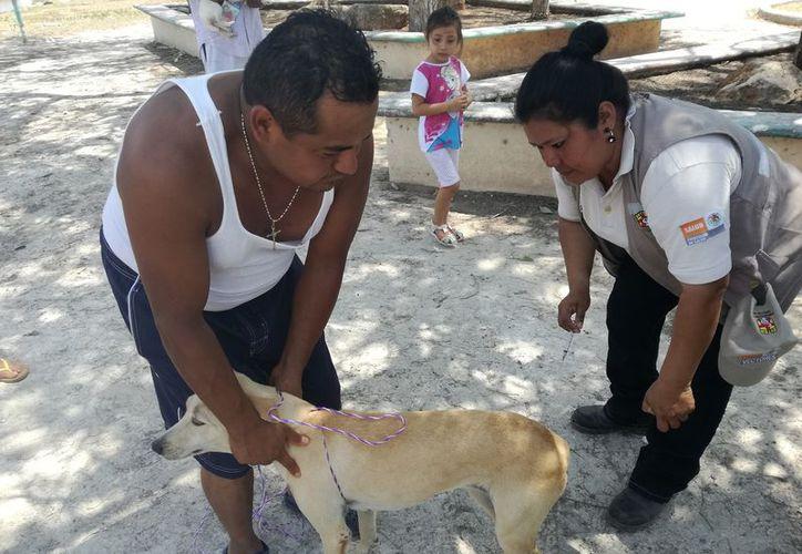 Dentro de estas amonestaciones contempla la pelea de perros, gallos o cualquier otro tipo de prácticas que impliquen daño a algún animal. (Javier Ortiz/SIPSE)