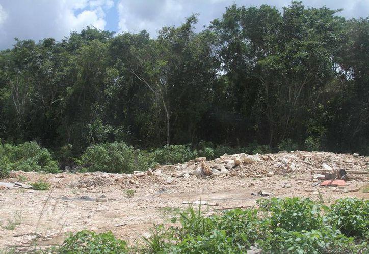 El ejido Playa del Carmen cuenta con 7 mil hectáreas propicias para la agricultura y acuacultura.  (Juan Cano/SIPSE)