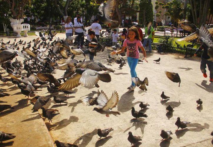 Los yucatecos disfrutaron ayer de un buen clima y de una temperatura que alcanzó los 31 grados. Se esperan clima agradable para los próximos 2 días. (Juan C. Albornoz/SIPSE)
