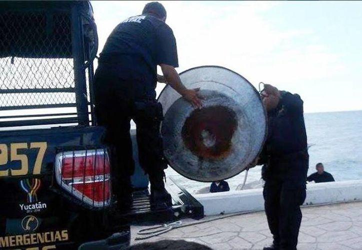 Agentes de la SSP confiscan ollas para cocinar pepino de mar. (Milenio Novedades)