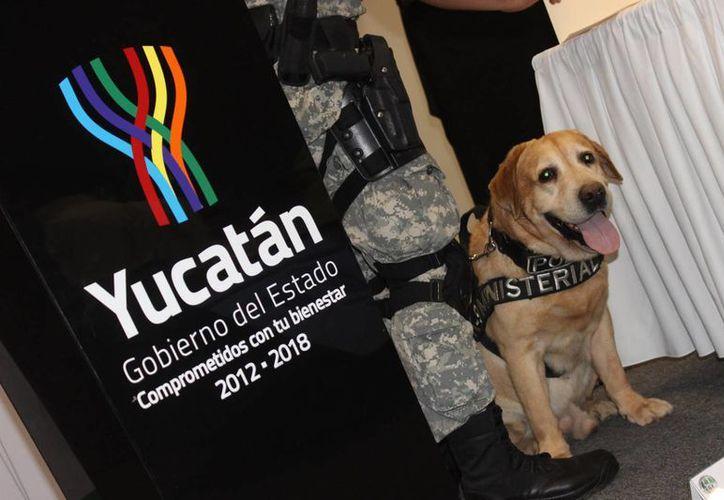 Amir, un histórico perro policía de Yucatán, recibió su jubilación con honores este lunes, tras un excelente trabajo con la Fiscalía. (Fotos cortesía del Gobierno de Yucatán)
