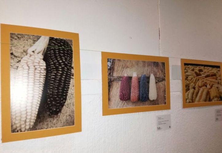 Las imágenes fueron tomadas en diversos pueblos y comunidades del país. (Faride Cetina/SIPSE)