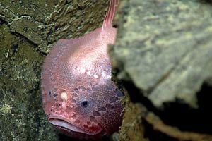 Conoce a los 'monstruos' que viven en el fondo del mar