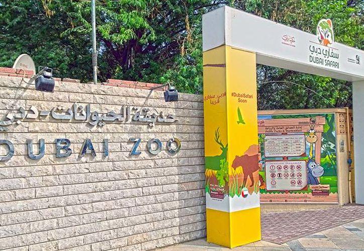 Los tres hombres deberán de hacer servicio comunitario en el zoológico municipal de Dubai. (Excelsior)