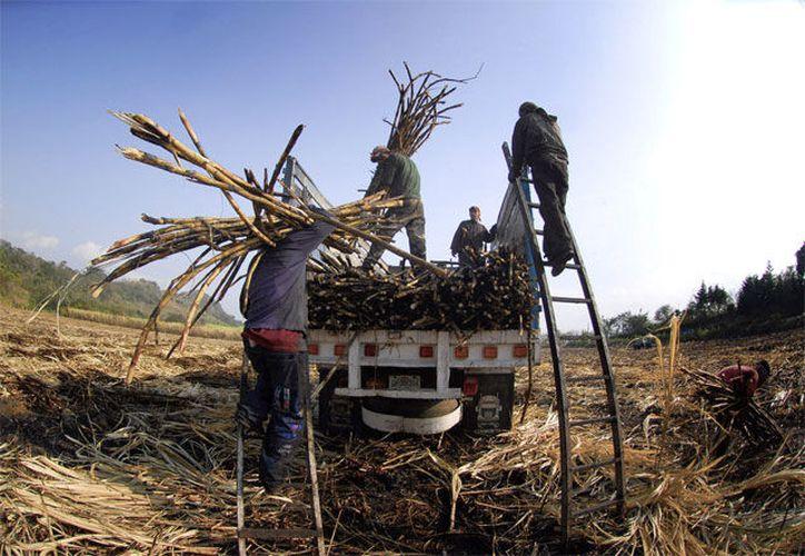 Con el seguro agrícola, se cubrirá cerca de 70 mil hectáreas de cultivos de temporal en Quintana Roo.