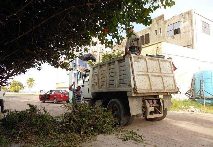Los trabajos de limpieza se complementaron con la reforestación de áreas. (Redacción/SIPSE)