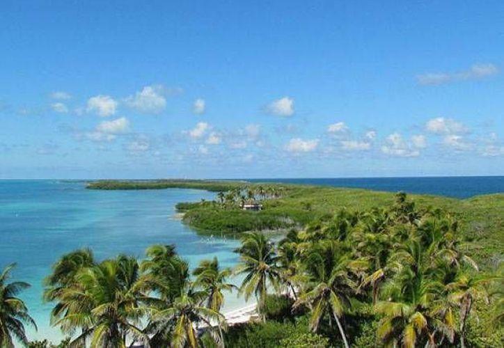 Isla Contoy cuenta con una gran riqueza forestal. (Israel Leal/SIPSE)