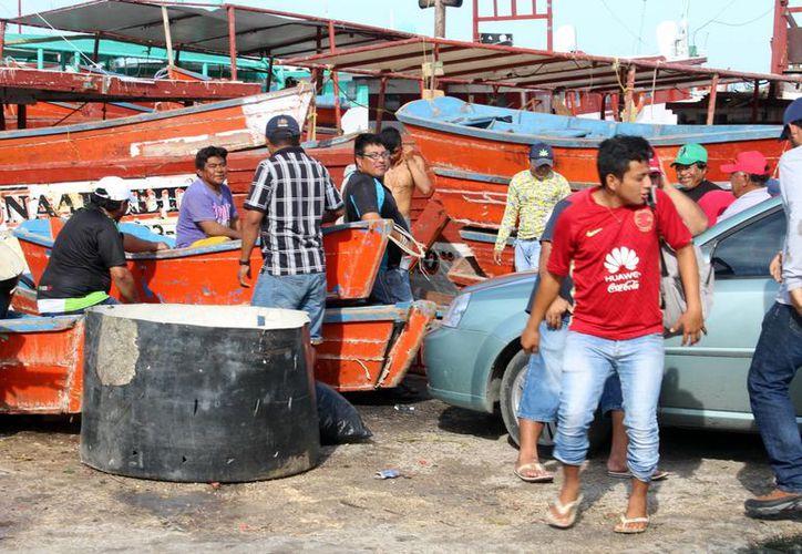 Fotografía de los pescadores de pulpo mientras guardan las embarcaciones, luego de una buena temporada de pesca. (Gerardo Keb/Milenio Novedades)