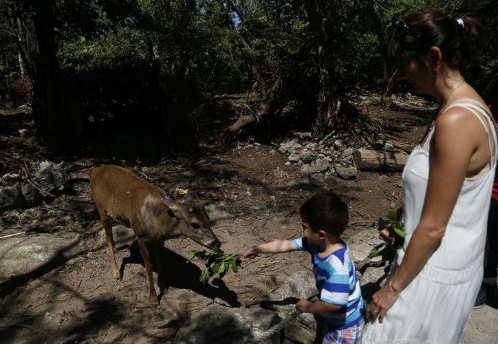 Los programas de conservación y educación ambiental son unas de las principales acciones que realizan para que los niños y adolescentes. (Israel Leal/SIPSE)