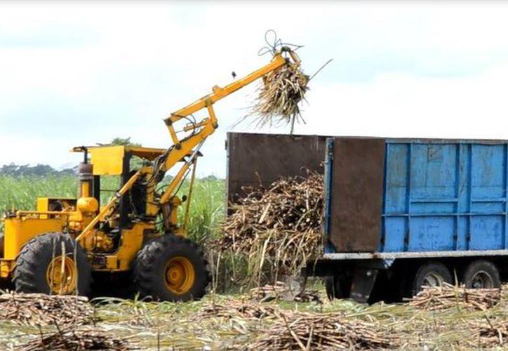 Productores buscan  alternativas para tener beneficios de otros derivados de la caña. (Foto: Juan Rodríguez/SIPSE)