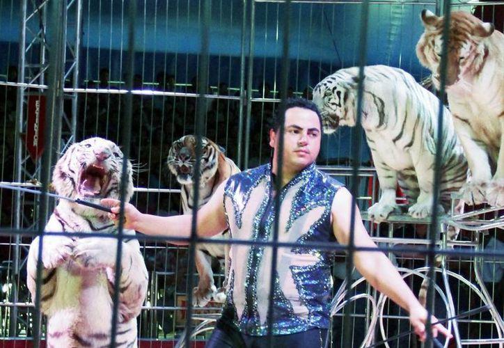 En la actualidad muchos circos siguen utilizando animales para sus espectáculos. (Milenio Novedades)