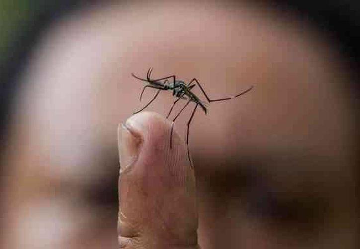 En Yucatán se pretende que con una sola prueba, en vez de numerosas, se pueda saber cuál es el padecimiento de un paciente de dengue o malaria, etc., por ello se invirtió en un prototipo detector. (SIPSE)