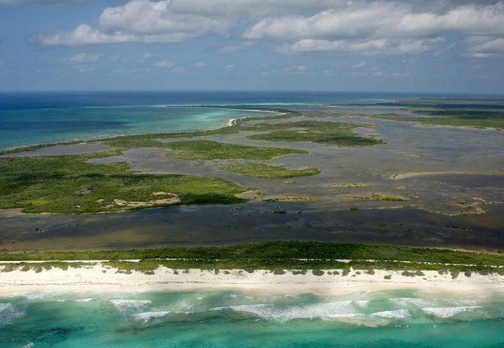 Manglar ocupa el 12% de la totalidad de la isla. (Redacción/SIPSE)