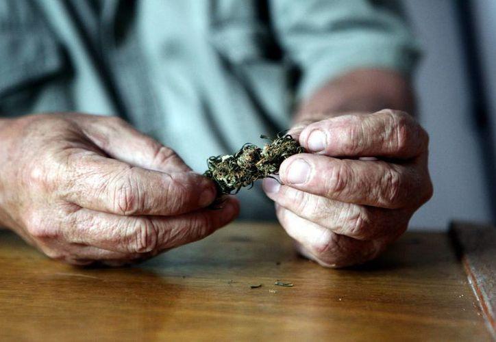 Una persona prepara un cigarrillo de marihuana en la Asociación de Estudios del Cannabis del Uruguay. (EFE/Archivo)