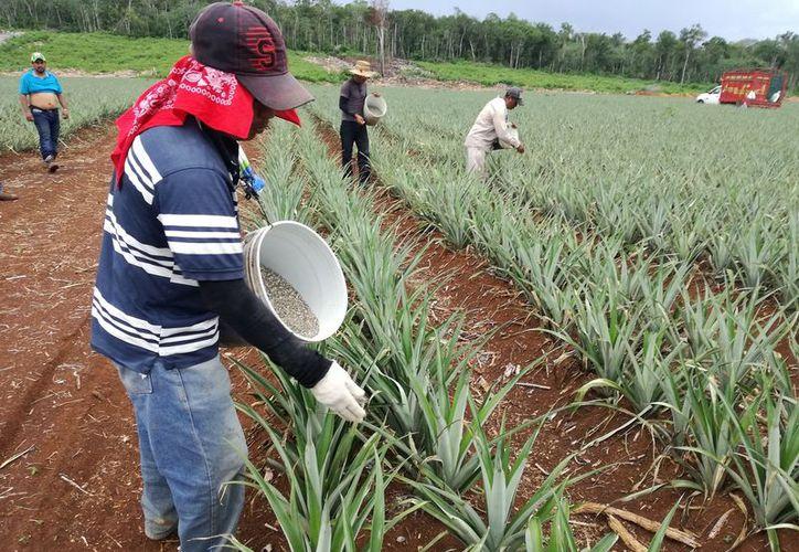 Productores de comunidades rurales de Bacalar piden ayuda para detectar semillas transgénicas. (Javier Ortiz/SIPSE)