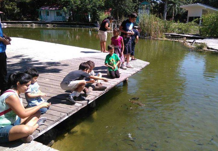 El zoológico cuenta con una colección de más de 50 especies de un promedio de 200 ejemplares e instalaciones seguras. (Redacción/SIPSE)