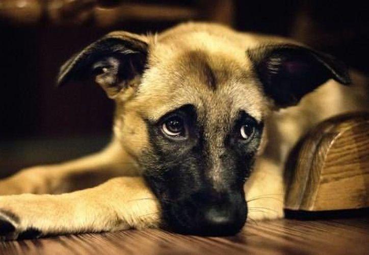Cuando presentan dificultad para abrir los ojos es momento de ir al veterinario. (Contexto/Internet)