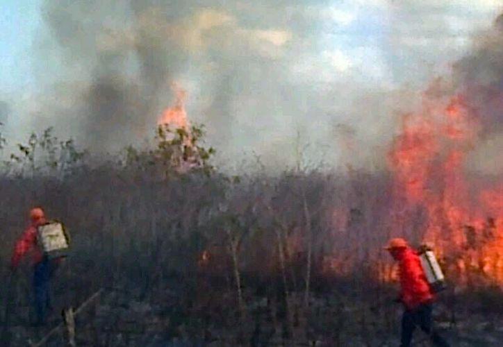 Los incendios por las quemas han dejado afectaciones menores. (Milenio Novedades)