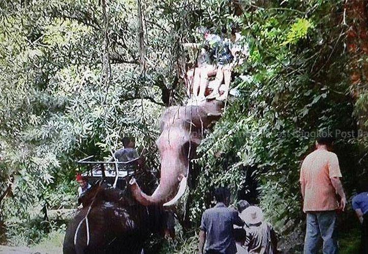 Imagen del momento en que el elefante es atraído por otros adiestradores para rescatar a los turistas. (bangkokpost.com/Cheewin Sattha)