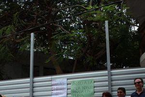 Piden protección de árboles en Calle Corazón