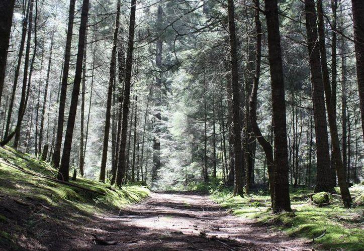 Con el acuerdo signado entre la Semarnat y la CNS, se buscará formar a un cuerpo de seguridad en materia ambiental a fin de asegurar que las ANP del país estén protegidas. (Archivo/Notimex)