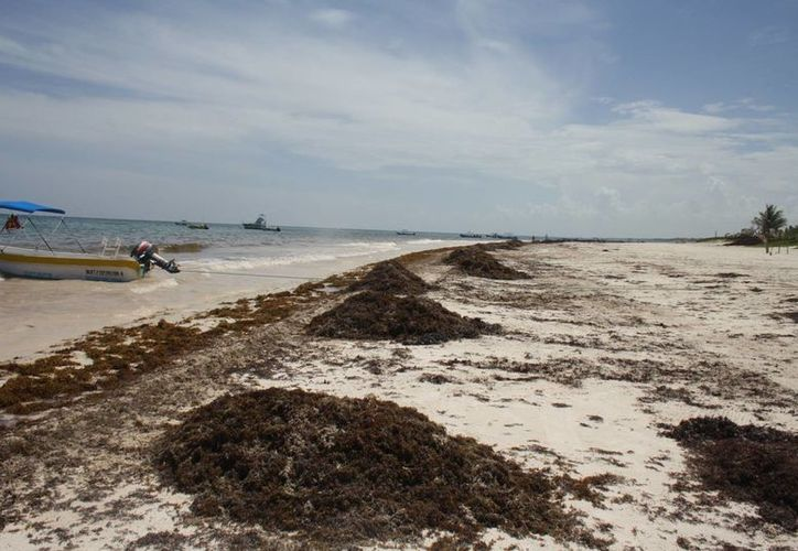 Los proyectos que se apoyarían este año estarán relacionados con programas de reforestación, desarrollos ecoturísticos, agricultura orgánica y limpieza de playas, entre otras actividades. (Archivo/SIPSE)