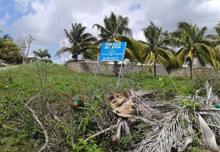 Alrededor de 24 terrenos se encuentran copados de maleza o completamente abandonados, algunos aun con letreros que indican que se encuentran a la venta. (Omar Capistrán/SIPSE)